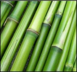Zuckerrohr, Bambus & Co
